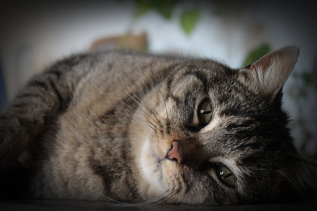 photography of gray and black tabby cat