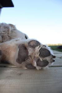 shallow focus photography of dog paw