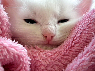 white kitten on pink textile