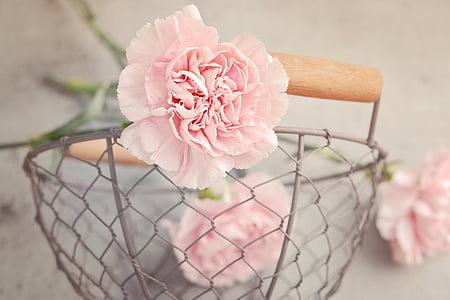 pink carnation flower on gray metal basket