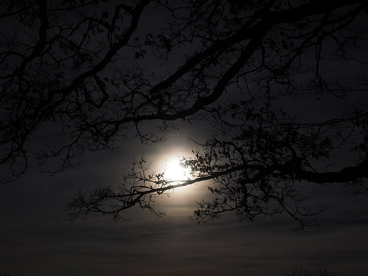 silhouette of tree branches during night