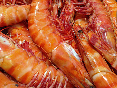 close-up photo of shrimps