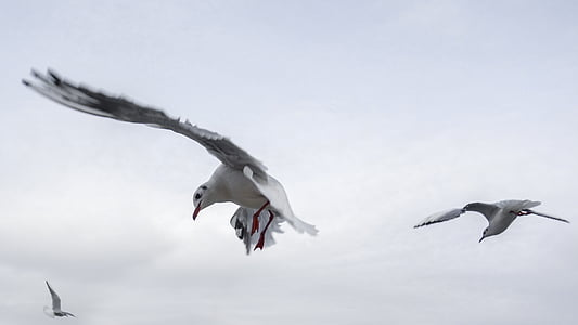 low angle photo of two seagulls flying under white clouds