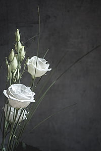 photo of three white rose stems