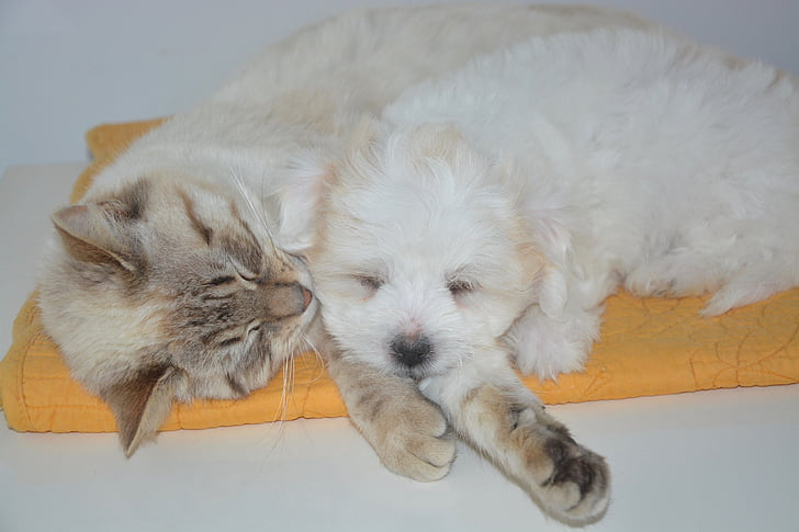 white puppy and white kitten