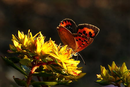 orange and black butterfly perched on yellow plant