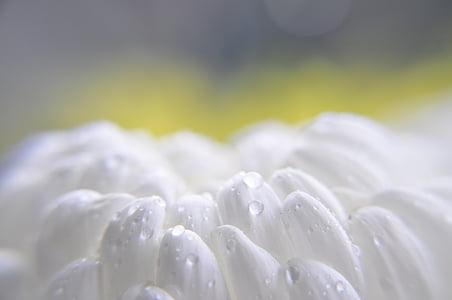 selective focus photo of white textile