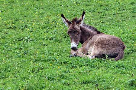 brown donkey on grass field