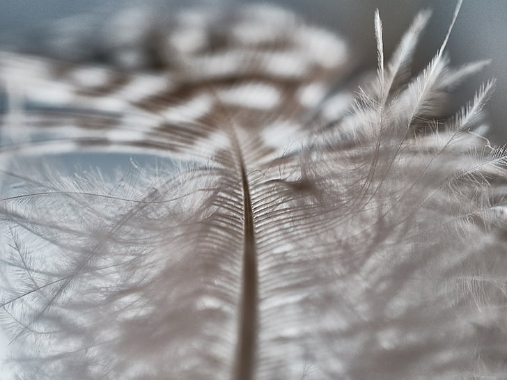 spring, slightly, bird feather, fluffy, lightweight, nature