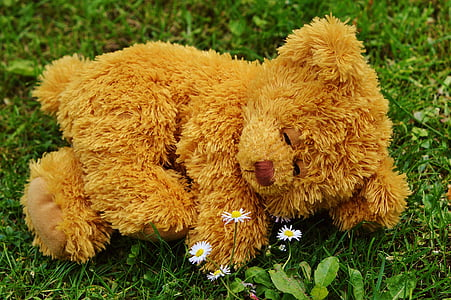 brown bear plush toy on green on grass