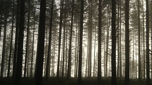 photo of brown trees during daytime surrounded by fog