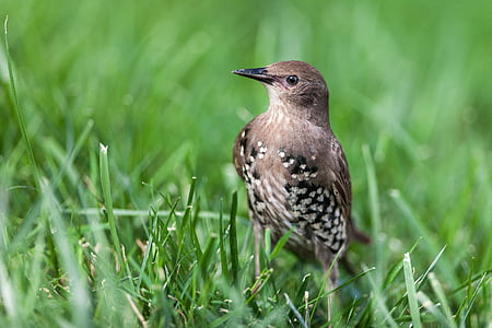 brown, black, and white bird on green grass