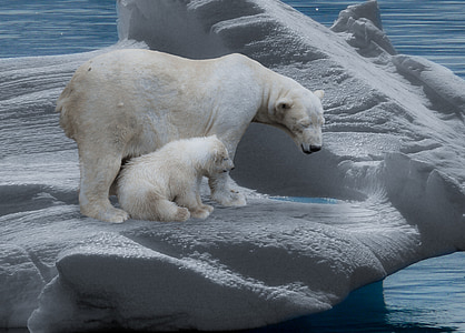 white polar bear with cub on iceburg