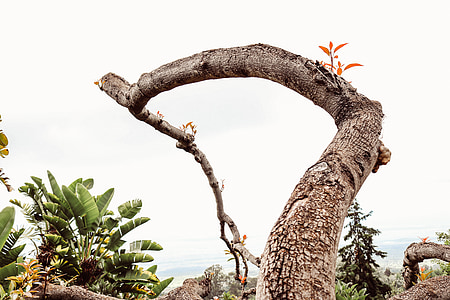 photograph of brown tree trunk during daytime
