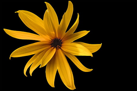 selective focus photograph of yellow Tithonia flower