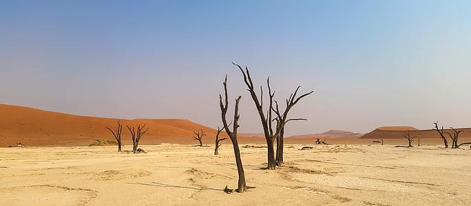 bareless tree on desert under calm sky