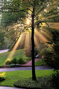 trees pass through crepuscular rays