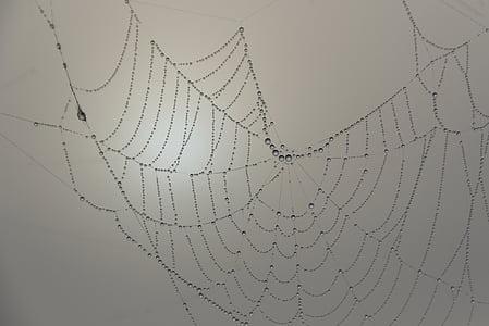 focus photo of spider web