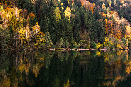 calm lake with brown trees and wooden dock