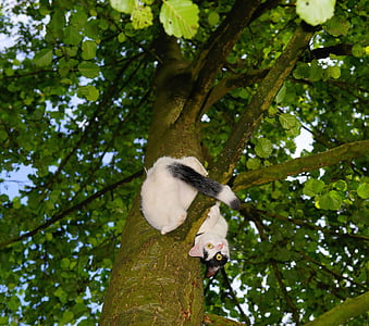 white and black cat on tall tree branch