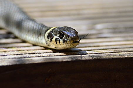 selective focus photography of snake