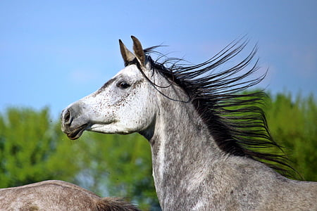 shallow focus photo of gray horse