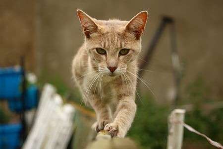orange tabby cat on fence