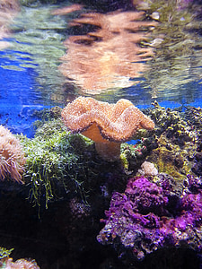 underwater photography of coral