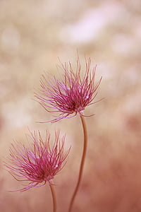 pink petaled flowers