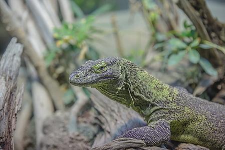 selective focus photography of monitor lizard