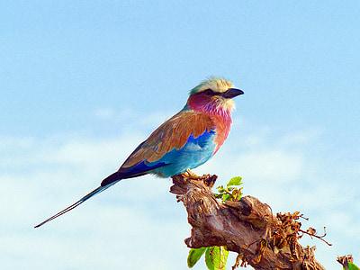 multicolored short-beaked bird on top tree branch