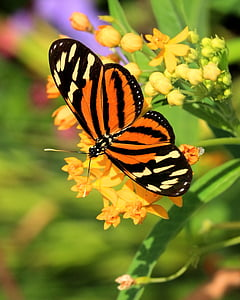 brown and black longwing butterfly perching on petaled flower in selective focus photography