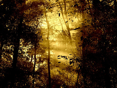 sun rays passing through trees