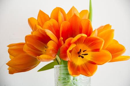 orange petaled flowers in vase