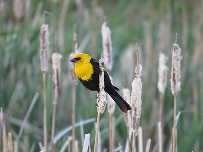 tilt shift lens photography of black and yellow bird