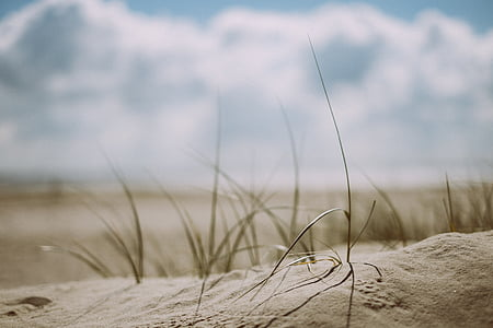 photo of grey sand and green grasses