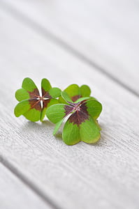 green and brown four clover leaves