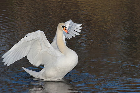 white goose on body of water at daytime