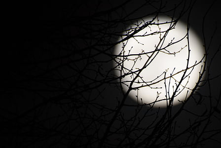 moon, full moon, night, dark, black, branches