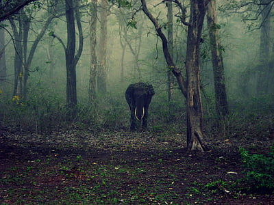 black elephant in forest