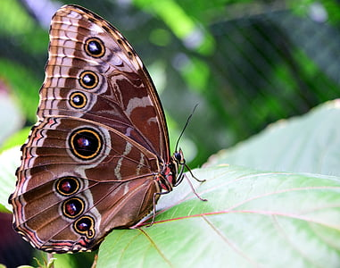 brown and white butterfly on green linear leaf