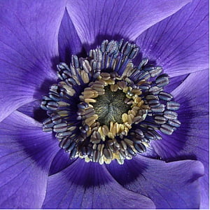micro photography of purple petaled flower