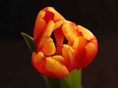 macro photography of orange and red petaled flower