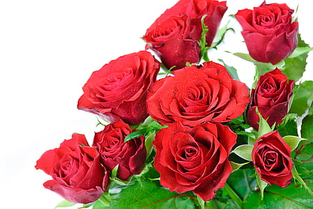 red rose flowers