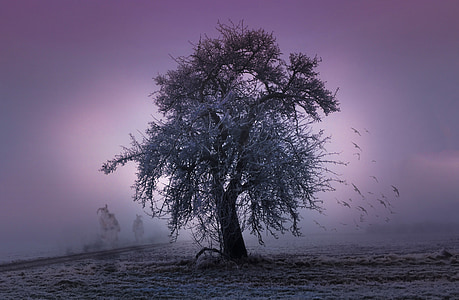 photo of brown tree