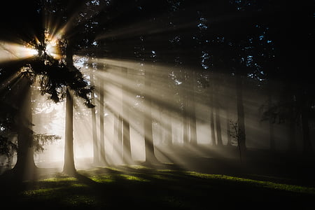 landscape photo of trees with sun rays passing trough