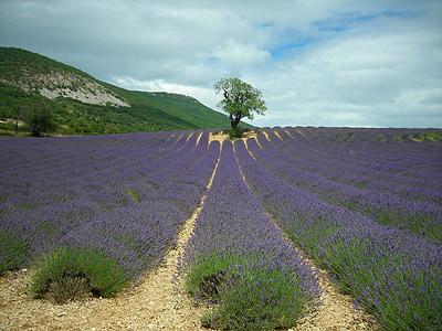 purple field near green tree and hill