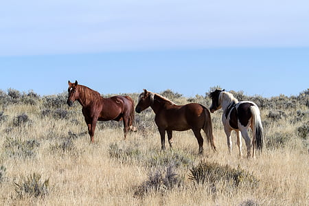 three horses standing on the ground surrounded by grass