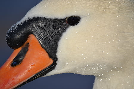 macro photography of white and black duck head