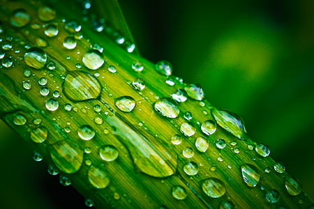 dew drops on green leaf plant